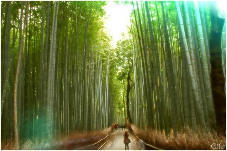 A bambusz csodája: kitartás nélkül nincs varázslat. 25mp-es poszt
